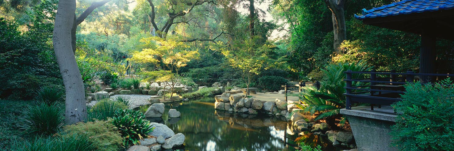 Los Angeles Japanese Garden: First Look: Maple At Descanso Gardens In La Canada