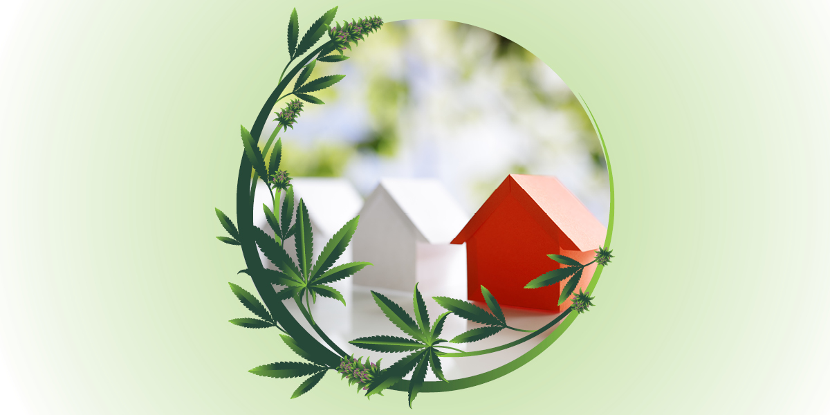 Cannabis plant enveloping model homes that resemble Monopoly pieces