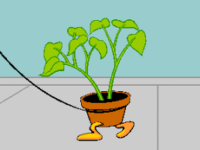 green houseplant with leaves and no flowers potted in a clay pot with orange feet at the bottom of the pot walking attached to a leash on gray floor with a teal wall background