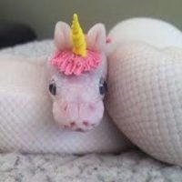 small albino snake with a unicorn hat on light colored carpet