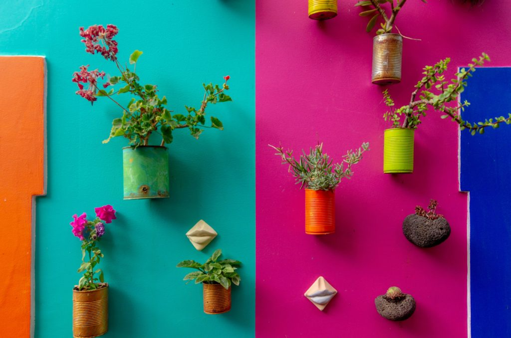 brightly colored walls with potted plants hanging on them