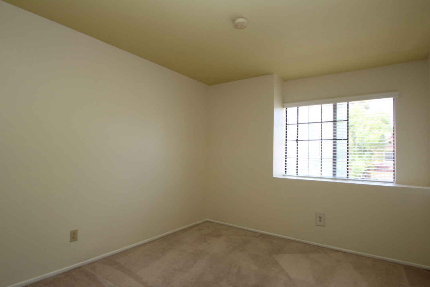 3912 Lost Springs Drive | Photo 16